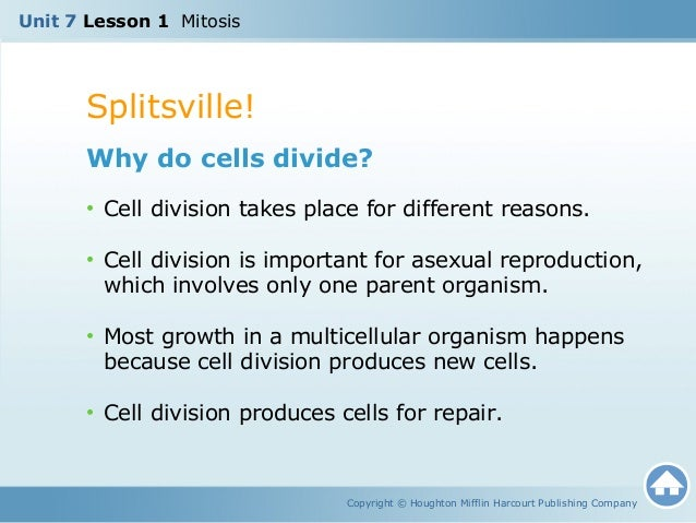 What are the three reasons cells reproduce asexually