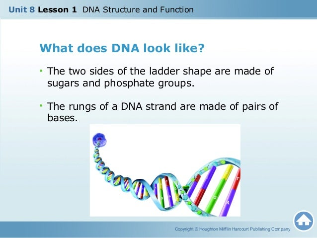 U8L1 DNA Structure & Function