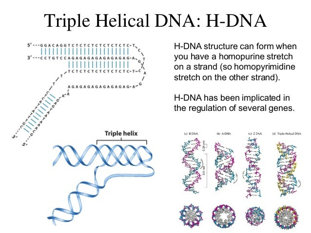 Dna Diagram H Online Schematic Diagram