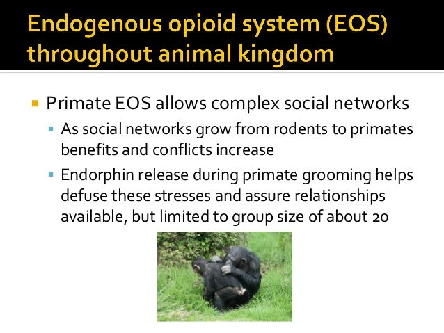 " Human social bonds more complex, extensive so need support beyond grooming (Dunbar):  Laughter ""primitive chorusing voc..."