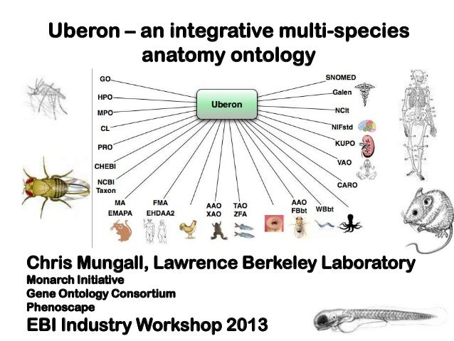 Uberon – an integrative multi-speciesanatomy ontologyChris Mungall, Lawrence Berkeley LaboratoryMonarch InitiativeGene Ont...
