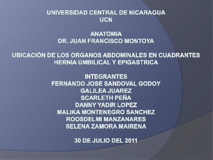 UNIVERSIDAD CENTRAL DE NICARAGUAUCNANATOMIADR. JUAN FRANCISCO MONTOYAUBICACIÓN DE LOS ORGANOS ABDOMINALES EN CUADRANTESHER...