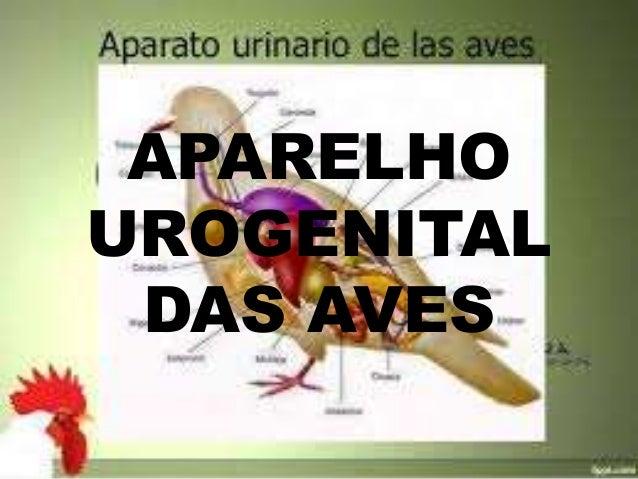 APARELHO UROGENITAL DAS AVES