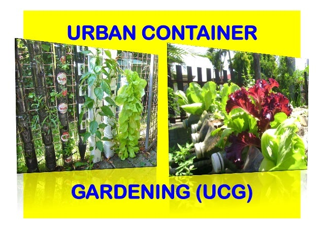 A Case Presentation On Urban Container Gardening UCG