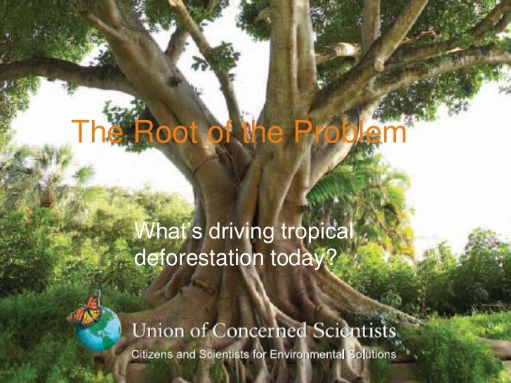 The Root of the Problem    What's driving tropical    deforestation today?