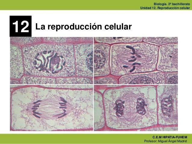Biología. 2º bachillerato                               Unidad 12. Reproducción celular12   La reproducción celular       ...