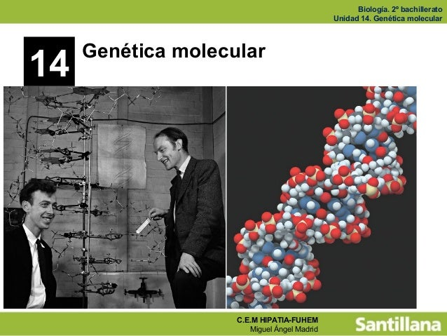 Biología. 2º bachillerato Unidad 14. Genética molecular C.E.M HIPATIA-FUHEM Miguel Ángel Madrid 14 Genética molecular