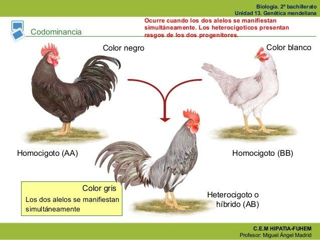 Ventajas de los hibridos biologia