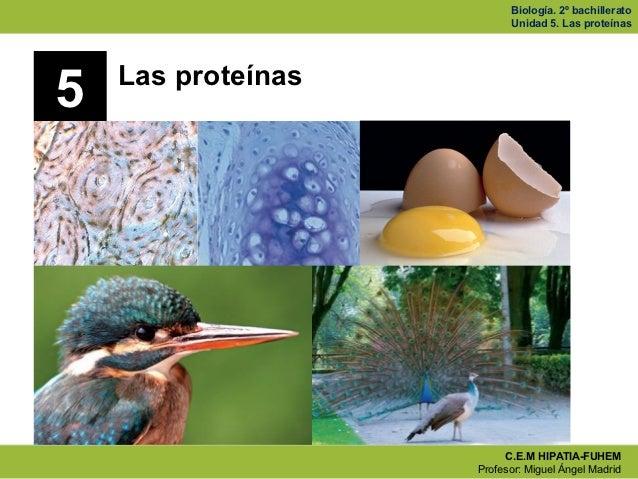 Biología. 2º bachillerato                          Unidad 5. Las proteínas    Las proteínas5                         C.E.M...