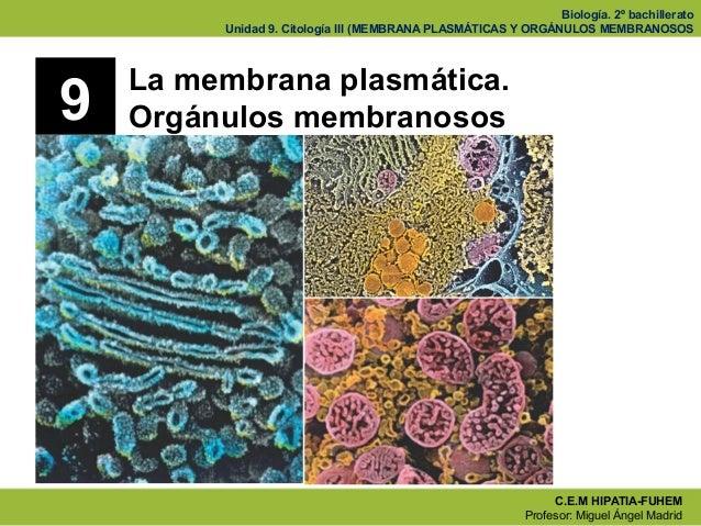 Biología. 2º bachillerato         Unidad 9. Citología III (MEMBRANA PLASMÁTICAS Y ORGÁNULOS MEMBRANOSOS    La membrana pla...