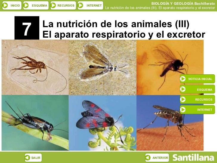 7 La nutrición de los animales (III) El aparato respiratorio y el excretor NOTICIA INICIAL ESQUEMA RECURSOS INTERNET