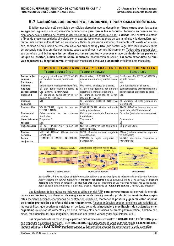 Ud1 anatomia-y-fisiologia-general-parte-2 part5