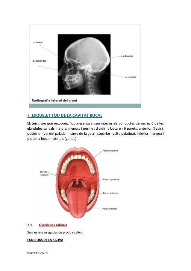Moderno En El Interior De La Anatomía Boca Bandera - Anatomía de Las ...