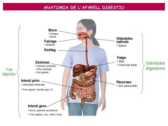Resultat d'imatges de aparell digestiu