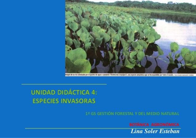 UNIDAD DIDÁCTICA 4: ESPECIES INVASORAS Lina Soler Esteban 1º GS GESTIÓN FORESTAL Y DEL MEDIO NATURAL BOTÁNICA AGRONÓMICA