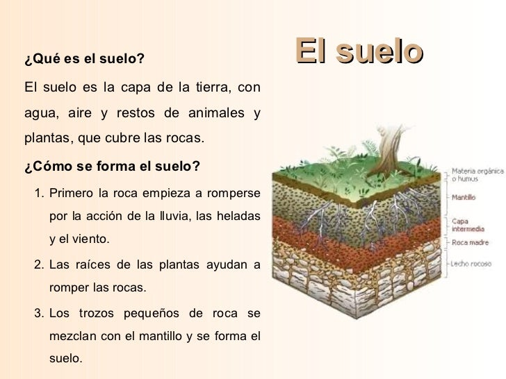 Ud 4 minerales rocas y suelo for El suelo y sus capas