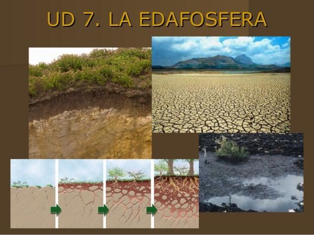 UD 7. LA EDAFOSFERA