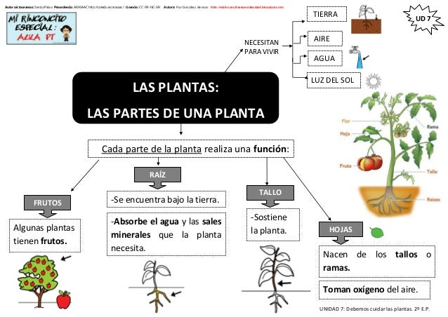 UNIDAD 7: Debemos cuidar las plantas. 2º E.P. UD 7 Autor pictogramas: Sergio Palao Procedencia: ARASAAC http://catedu.es/a...