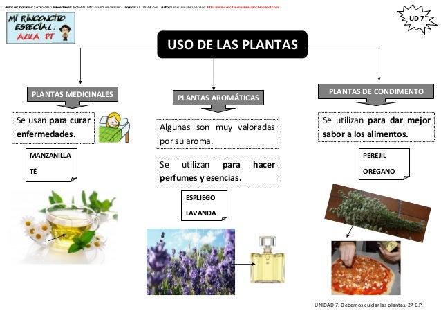 Ud7 debemos cuidar las plantas 2 de primaria for Como cuidar las plantas