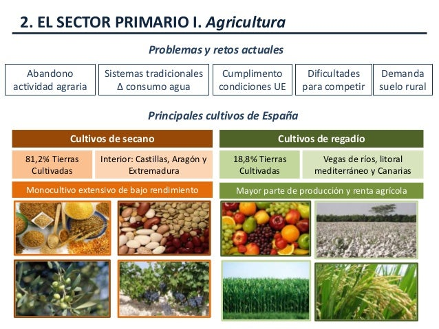 La economía en España (Tema 9)