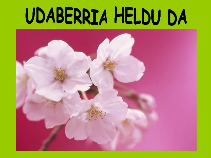 UDABERRIA HELDU DA