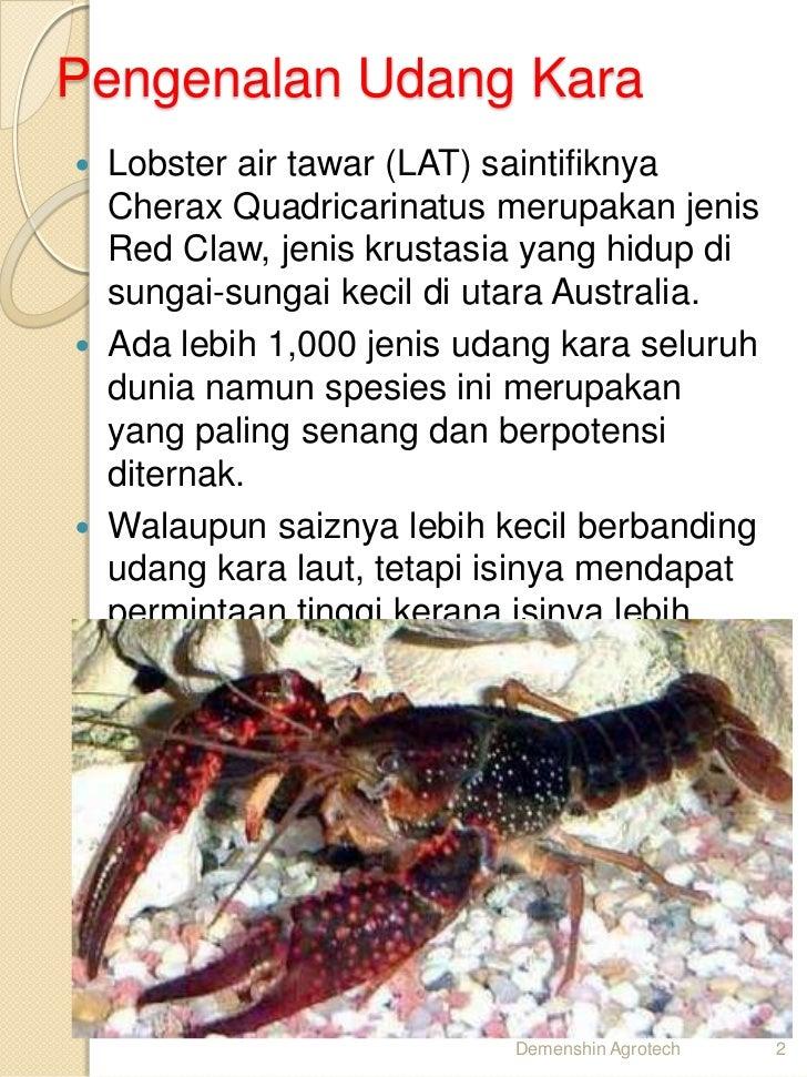 Cara ternak Udang kara lobster air tawar LAT di 017-2839861.  Slide 2