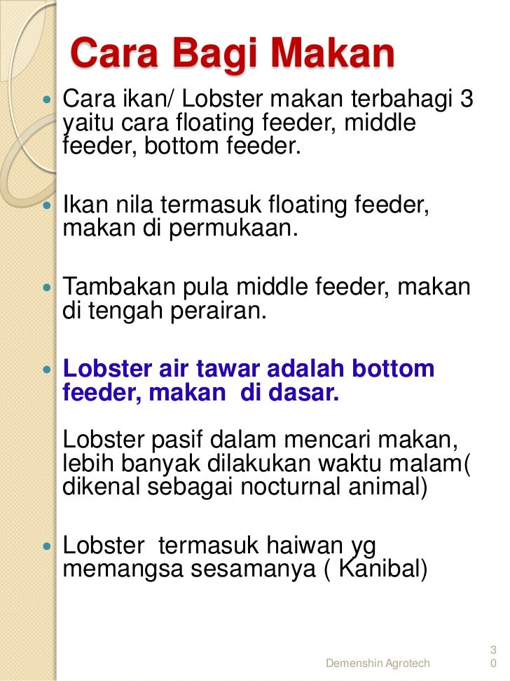 Cara ternak Udang kara lobster air tawar LAT di 017-2839861. Ikan Tambakan