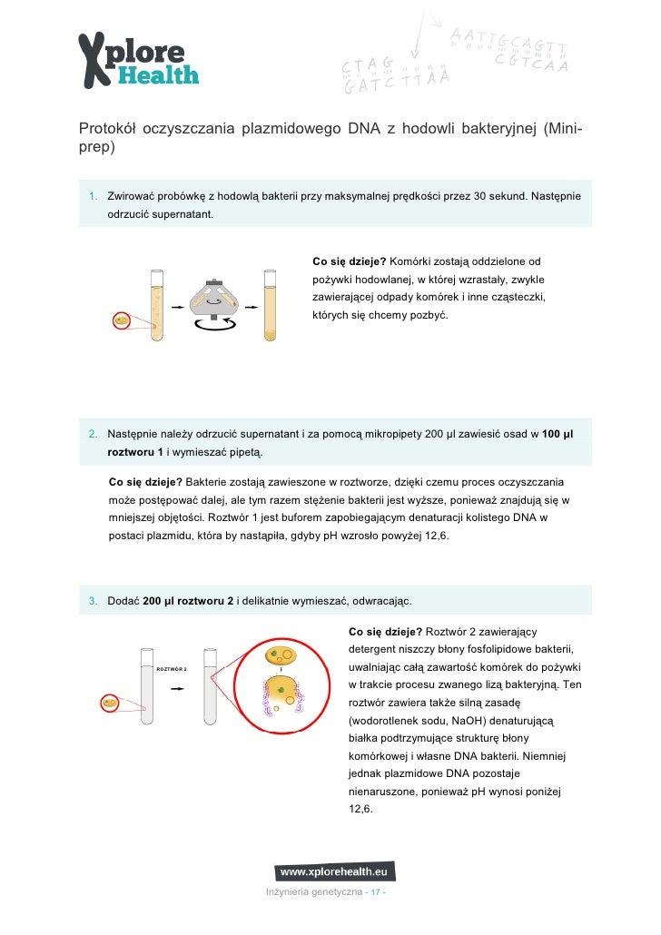 Protokół oczyszczania plazmidowego DNA z hodowli bakteryjnej (Mini-prep) 1. Zwirować probówkę z hodowlą bakterii przy maks...
