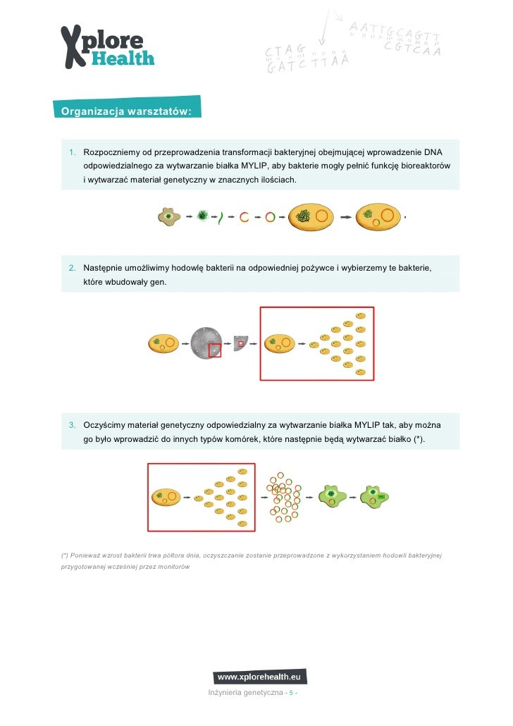 Organizacja warsztatów:  1. Rozpoczniemy od przeprowadzenia transformacji bakteryjnej obejmującej wprowadzenie DNA       o...
