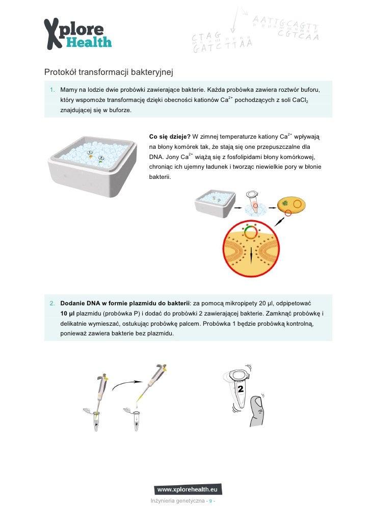 Protokół transformacji bakteryjnej 1. Mamy na lodzie dwie probówki zawierające bakterie. KaŜda probówka zawiera roztwór bu...