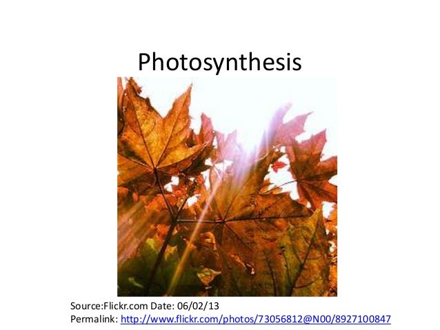 PhotosynthesisSource:Flickr.com Date: 06/02/13Permalink: http://www.flickr.com/photos/73056812@N00/8927100847