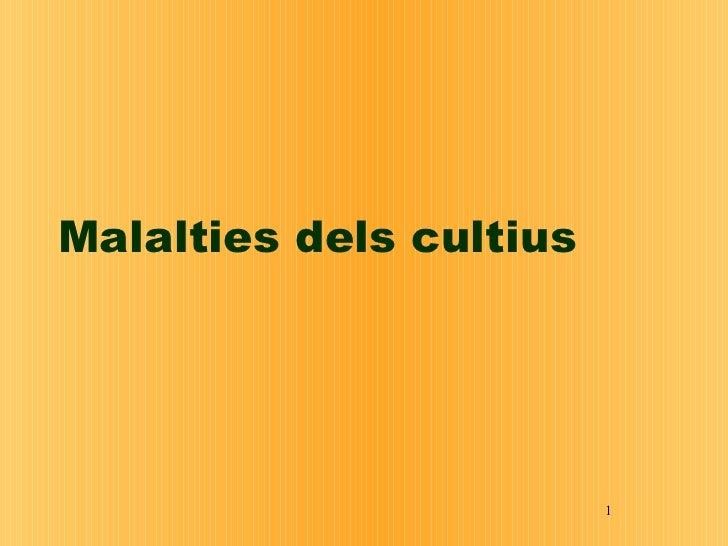 Malalties dels cultius