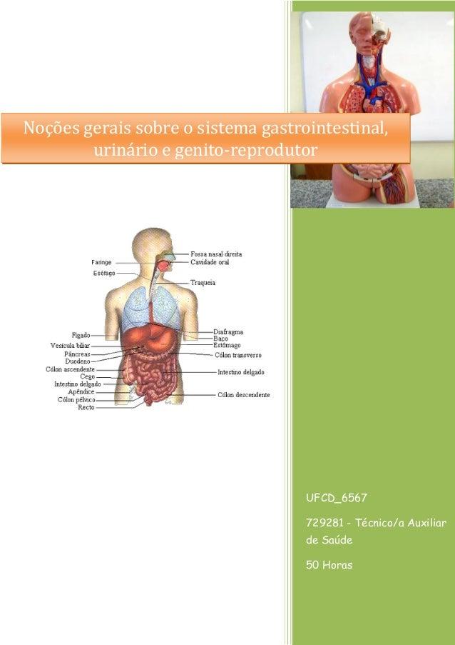 UFCD_6567 729281 - Técnico/a Auxiliar de Saúde 50 Horas Noções gerais sobre o sistema gastrointestinal, urinário e genito-...
