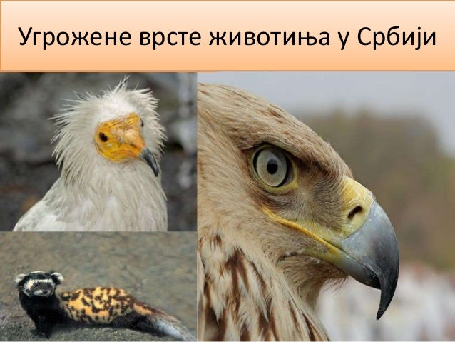 Угрожене врсте животиња у Србији