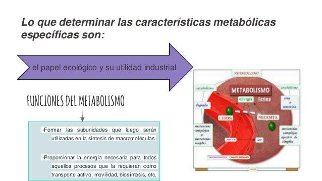 metabolismo del hierro analitica simptoms