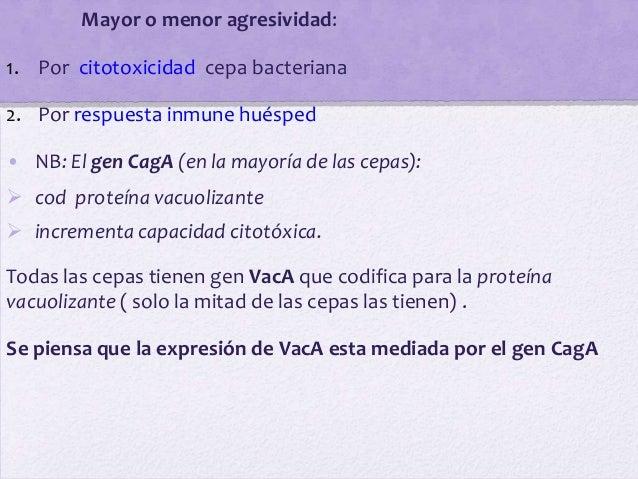 Mayor o menor agresividad:1. Por citotoxicidad cepa bacteriana2. Por respuesta inmune huésped• NB: El gen CagA (en la mayo...