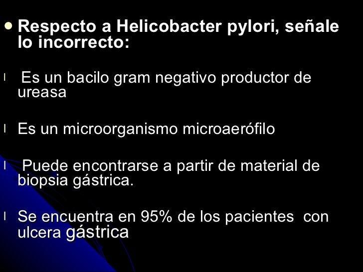 <ul><li>Respecto a Helicobacter pylori, señale lo incorrecto: </li></ul><ul><li>Es un bacilo gram negativo productor de ur...