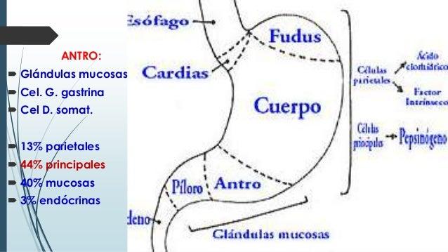 ULCERA PEPTICA Y CANCER GASTRICO ENARM 2014