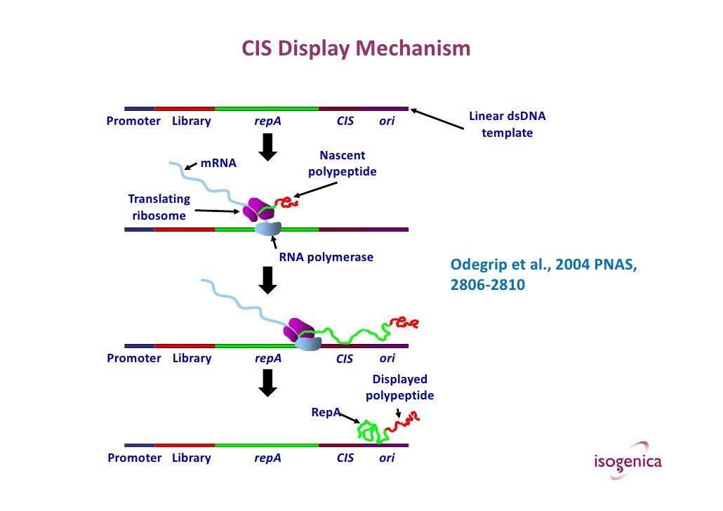 Chris Ullman, Isogenica, 'The use of CIS display for drug