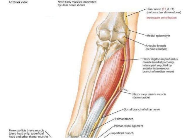 Anatomy and Examination of Ulnar & Sciatic Nerves