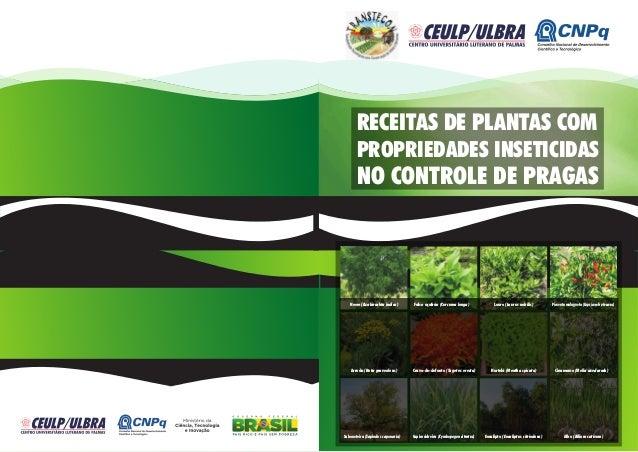 RECEITAS DE PLANTAS COM PROPRIEDADES INSETICIDAS NO CONTROLE DE PRAGAS Falso açafrão (Curcuma longa) Louro (Laurus nobilis...
