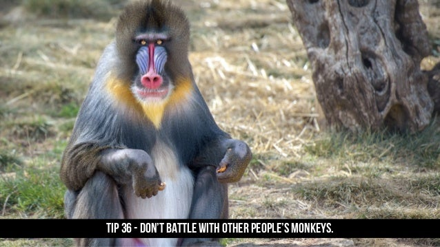 TIP 36 - Don't battle with other people's monkeys.