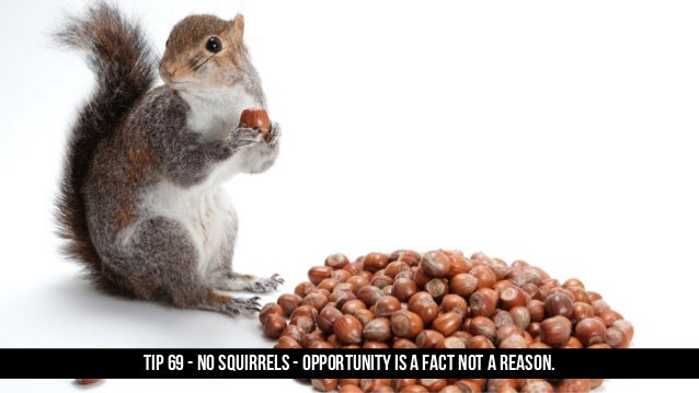 TIP 69 - No squirrels - opportunity is a fact not a reason.