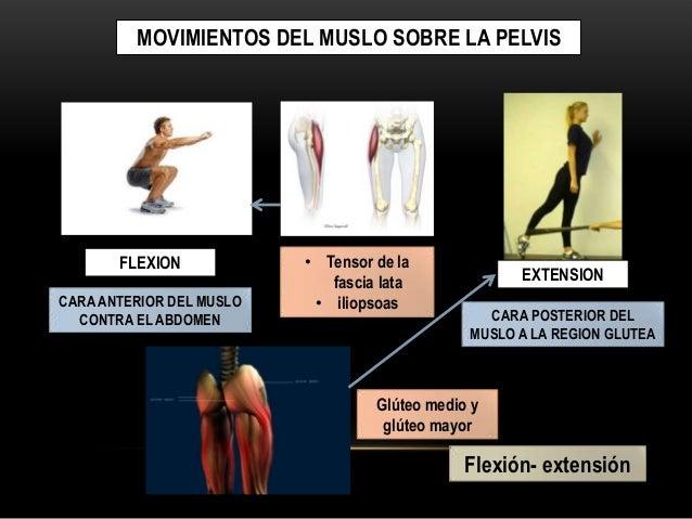 Movimientos y anatomía de superficie (miembro inferior, muslo y regió…