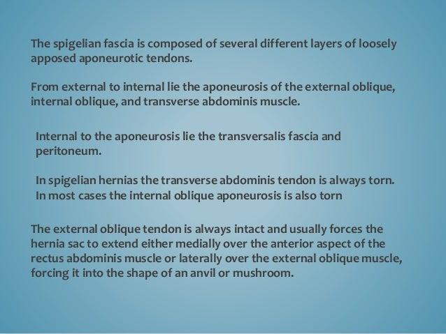 The spigelian fascia is composed of several different layers of loosely apposed aponeurotic tendons. From external to inte...