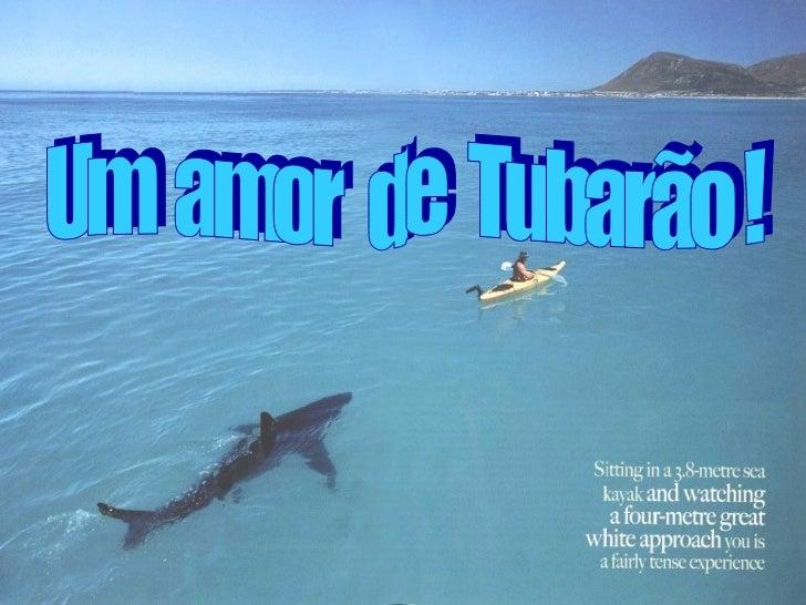Um  amor  de  Tubarão !
