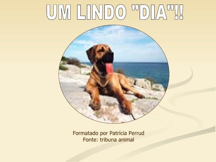 """UM LINDO """"DIA""""!! Formatado por Patrícia Perrud Fonte: tribuna animal"""