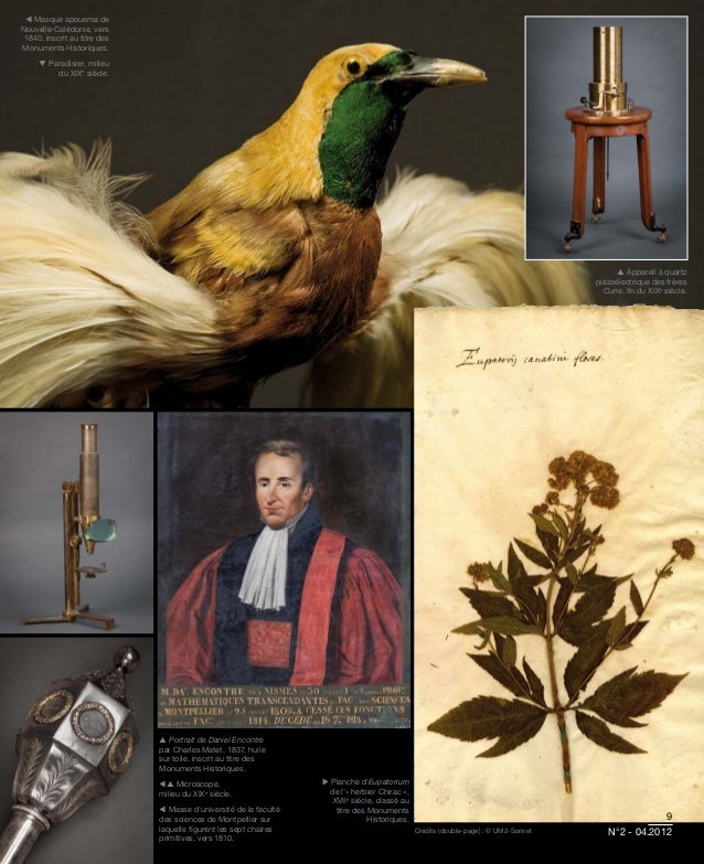  Masque apouema deNouvelle-Calédonie, vers 1840, inscrit au titre desMonuments Historiques.      Paradisier, milieu     ...