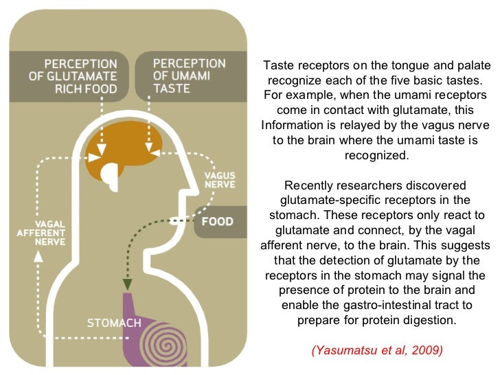 umami taste receptors essay In summary, our findings suggest that different combinations of t1rs function as  sweet and umami taste receptors intriguingly, human and rat t1r2/t1r3 were.