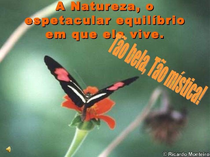 A Natureza, o espetacular equilíbrio em que ela vive. Tão bela, Tão mística!
